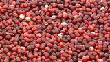 EU: Strafzölle auf Cranberries?