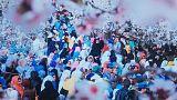 نمایشگاه عکس «سرزمین گل بادام» افغانستان