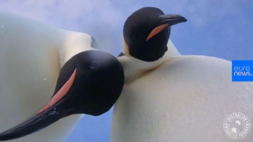 Történelmi pingvinszelfi