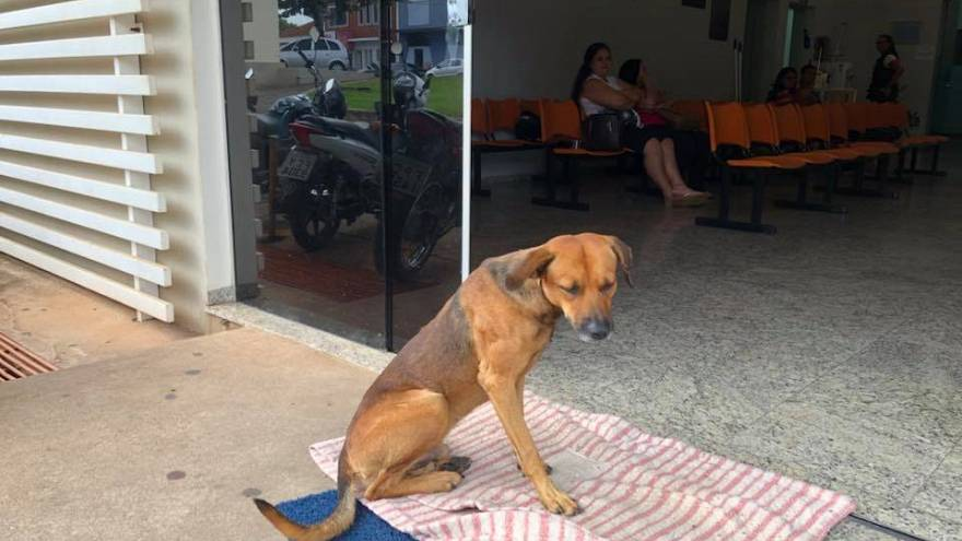 Faithful mutt waits months at Sao Paulo hospital for dead owner to return