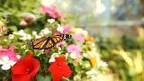 Καλιφόρνια: Η «ζούγλα» με τις πεταλούδες στο Σαν Ντιέγκο