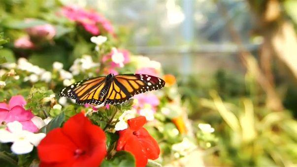 Le farfalle di San Diego, un angolo di paradiso tropicale