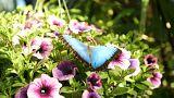 Знакомство с бабочками