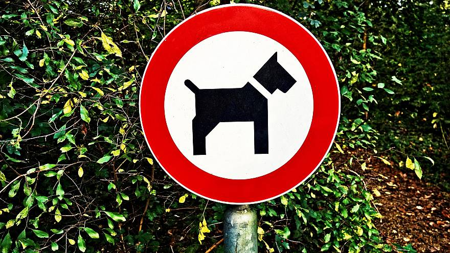 Villagers create 'Poopfolio' map to shame dog owners into cleaning up after their pets