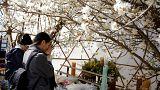 Ιαπωνία: Επτά χρόνια από τον καταστροφικό σεισμό