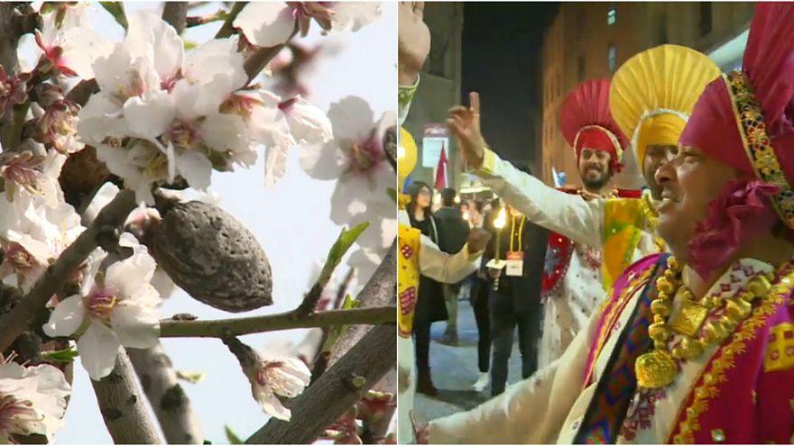 Mandorli e tradizioni: l'Unesco sfila ad Agrigento