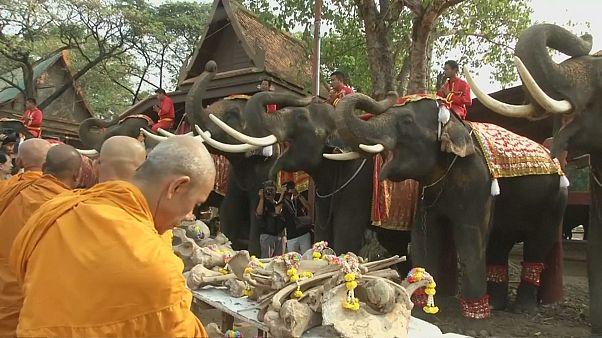 بزرگداشت روز فیل در تایلند