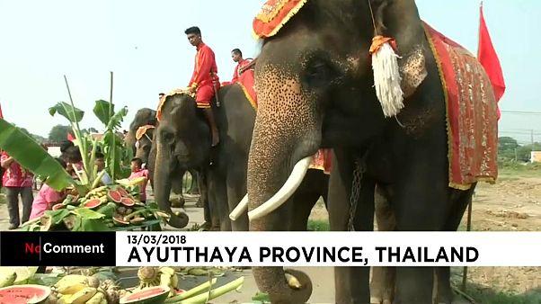Journée de l'éléphant en Thaïlande