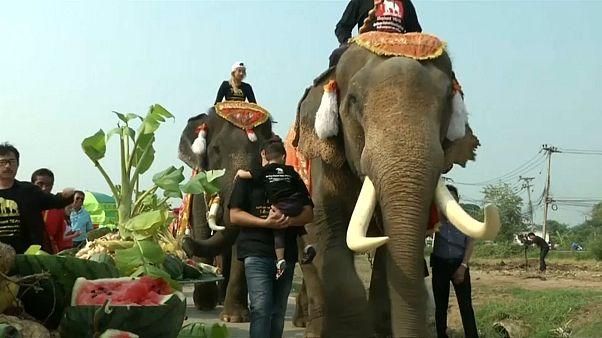Früchte-Buffet für die Elefanten am Elefanten-Tag