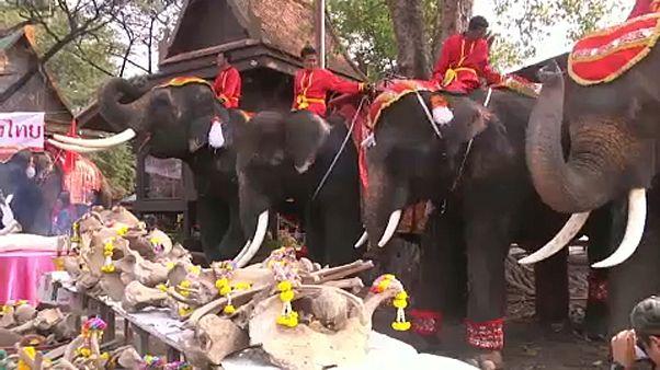 Thaiföld: Nemzeti Elefánt Nap