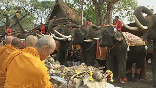 Tailandia celebra el día nacional del elefante