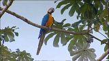 Apocalyptic forecast for world's wildlife by 2100 says WWF