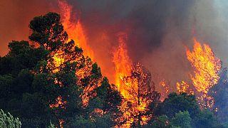 130 δασικές πυρκαγιές σε ένα 24ωρο