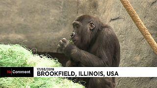 حيوانات حديقة إلينوي الأمريكية تحتفل بعيد القديس باتريك على طريقتها الخاصة