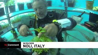Un jardin potager sous-marin à l'essai en Italie