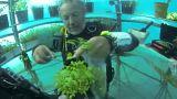 مزارع تحت الماء.. قفزة نوعية في علوم الزراعة