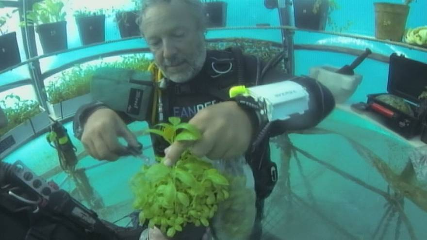 Underwater agriculture growing basil, lettuce and strawberries