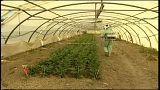 Via libera dell'Ue all'acquisizione di Monsanto da parte di Bayer