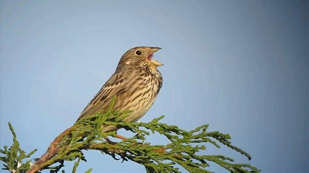 Здесь птицы не поют