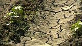 Réchauffement et CO2 : nouveaux rapports alarmants