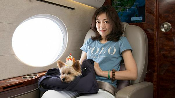 كلبان مدللان على متن رحلة فاخرة للترفيه عن الحيوانات الأليفة