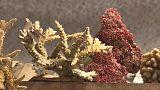 Украли кораллы
