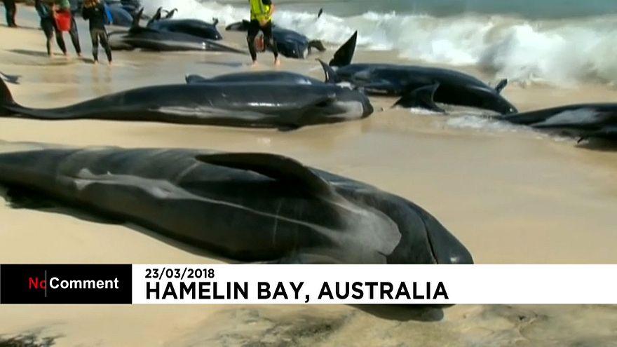 150 Wale gestrandet
