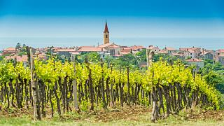 Croatia's got a delicious gastronomical region and we went to taste it