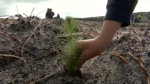 La forêt de Leiria va renaître de ses cendres
