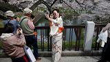 الربيع في طوكيو