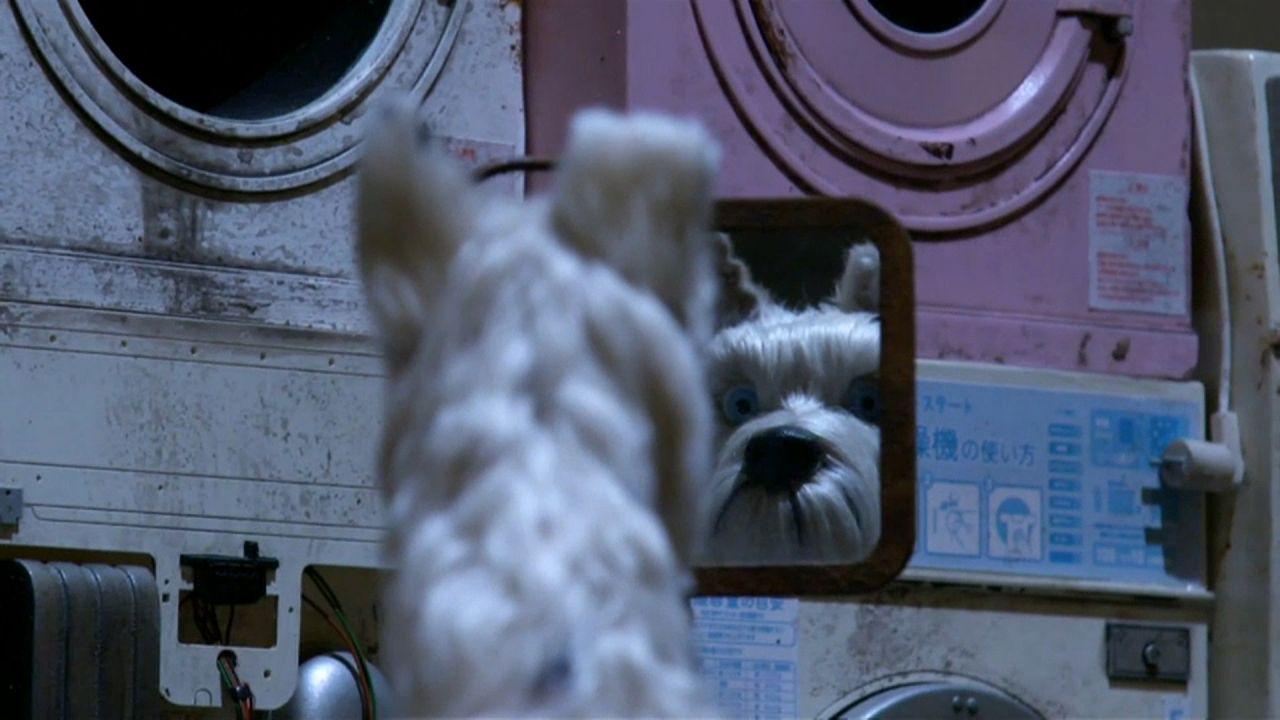 'Isle of Dogs': Kino – auf den Hund gekommen