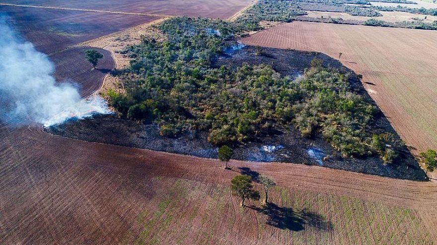 Hogyan pusztítja az Ön hamburgere a dél-amerikai őserdőket?