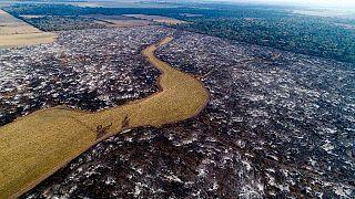 Argentinien: wälder weichen hier Sojafeldern