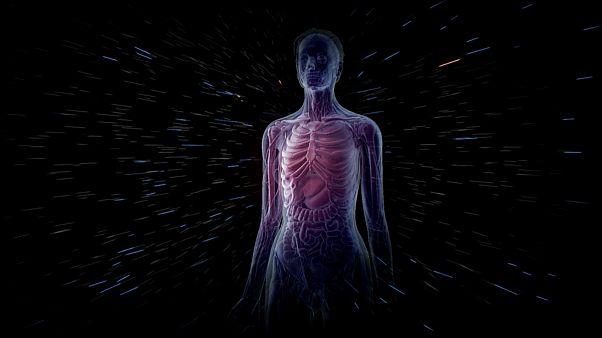 دانشمندان موفق به کشف عضو ناشناخته بدن انسان شدند