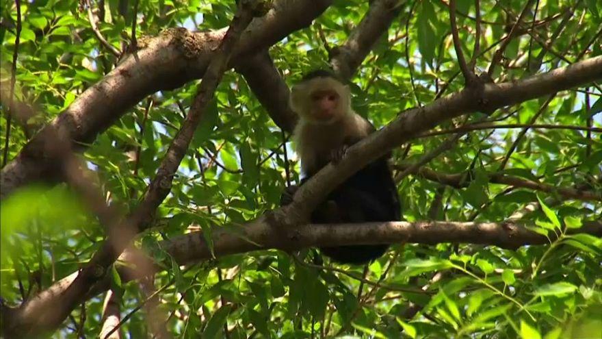 Un mono capuchino paraliza el tráfico en Ciudad de México