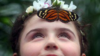 Ein Kind mit einem Schmetterling am Natural History Museum in London