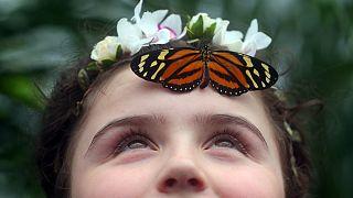 ۶۰ نوع پروانه از قاره آمریکا، آسیا و آفریقا مهمان موزه تاریخ طبیعی لندن