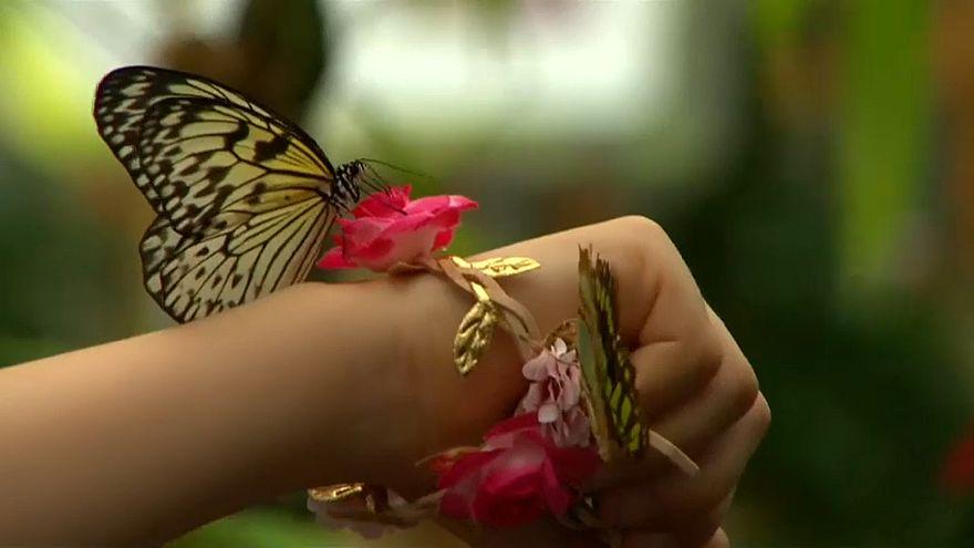 """""""Сенсационные бабочки"""". Лови момент!"""