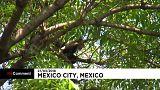 Mexico : un singe se fait la belle et déambule dans la ville