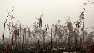 Németország is segítséget ajánl az amazóniai erdőtüzek oltásához
