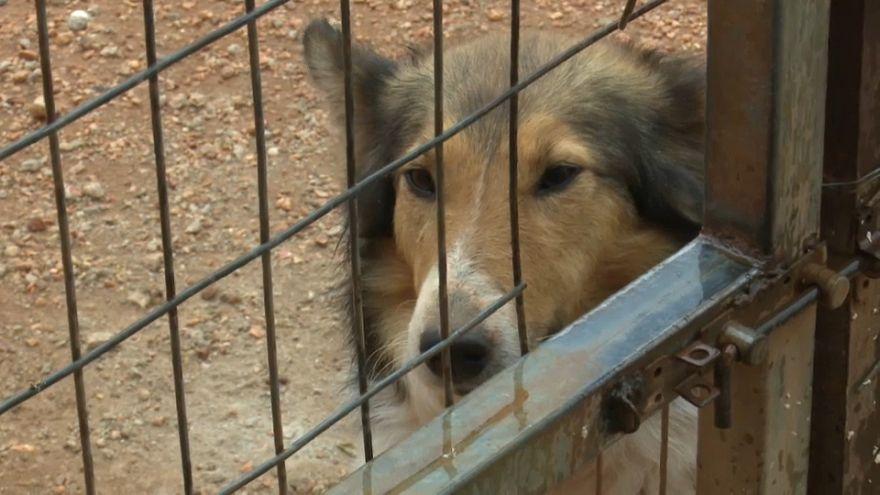 Streunende Tiere in Griechenland: Gesetzentwurf zurückgezogen