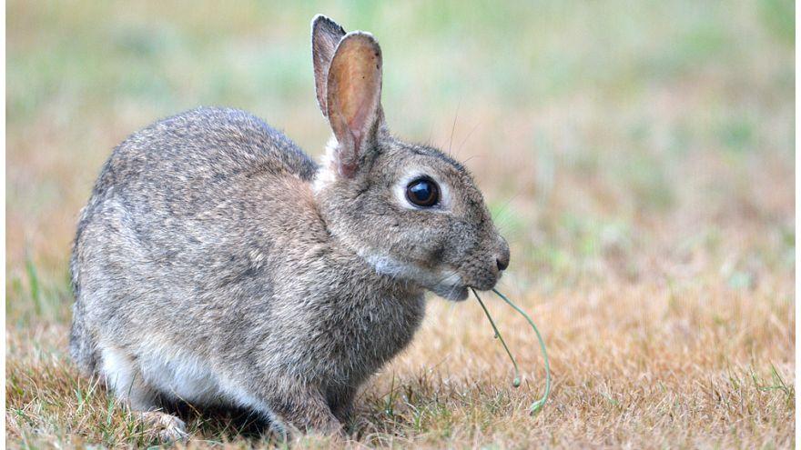An Ostern Hasen suchen: 1,8 Mio Wiener zum Zählen aufgerufen!