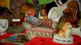 Sausage dogs on display