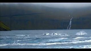 Φερόες Νήσοι: Η μόλυνση των θαλασσών