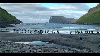 İnsanın dünyaya verdiği zararı sorgulayan belgesel: Adalar ve Balinalar