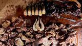 أكل اللحوم المطهوة والمشوية جيدا يسبب ارتفاع ضغط الدم