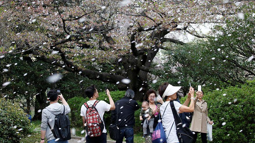 Oι κερασιές άνθισαν στην Ιαπωνία