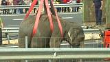 Fallece un elefante en un accidente en la autovía A-30