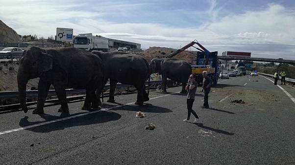 Elephant dies in accident on Spanish motorway