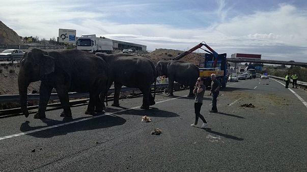 Elephant dies in accident on Spanish motorway